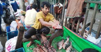 প্রতিদিন ৫০০ কেজি মাছ কাটেন পিন্টু