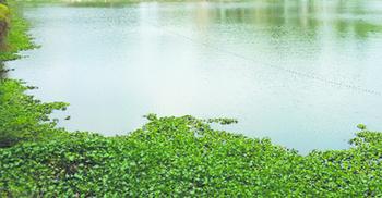 দিনাজপুর পুকুরে ডুবে প্রাণ গেলো দুই শিশুর