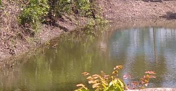 সুনামগঞ্জে নদীতে ডুবে দুই শিশুর মৃত্যু