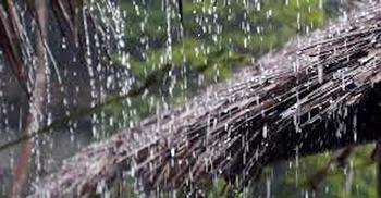 পটুয়াখালীতে বছরের সর্বোচ্চ বৃষ্টিপাত রেকর্ড