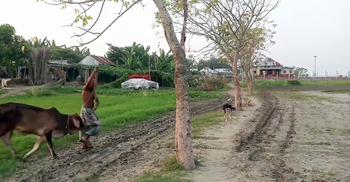 রাস্তা-স্কুল-হাসপাতাল কিছুই নেই, দুর্ভোগে রাজবাড়ীর চরের মানুষ