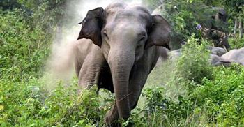 রাঙামাটিতে বন্যহাতির আক্রমণে মানসিক প্রতিবন্ধীর মৃত্যু