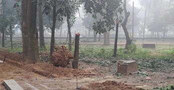সোহরাওয়ার্দীর শতবর্ষী গাছ কাটা বন্ধে আরও ৬ সংগঠনের আইনি নোটিশ