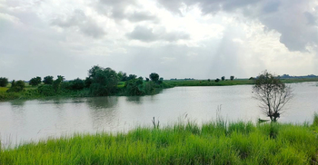 ফরিদপুরের সালাম খাঁর ডাঙ্গী গ্রামে 'কুমির আতঙ্ক'