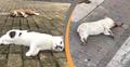 ভাইরাসের আতঙ্কে চীনে কুকুর বিড়াল হত্যার হিড়িক